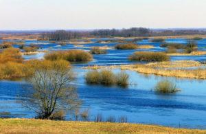 widok na bagna w biebrzańskim parku narodowym