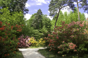 BUXIDA, Wycieczki dla szkół i firm,Arboretum w Rogowie