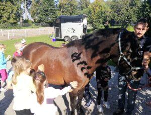 wycieczka dla dzieci, konie